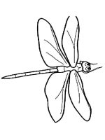 Dragonfly-coloring-pages-16