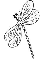 Dragonfly-coloring-pages-7