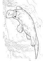 Duckbill-coloring-pages-10
