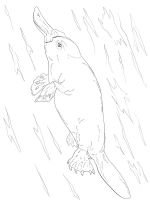 Duckbill-coloring-pages-12