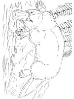 Duckbill-coloring-pages-13