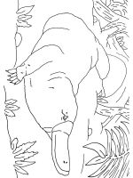 Duckbill-coloring-pages-15