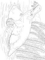 Duckbill-coloring-pages-6