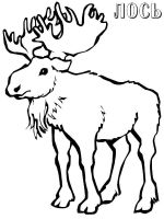 Elk-coloring-pages-10