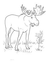Elk-coloring-pages-13