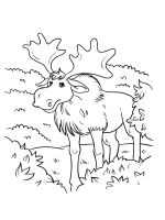 Elk-coloring-pages-24