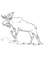 Elk-coloring-pages-3