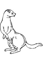 Ferret-coloring-pages-1