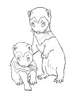 Ferret-coloring-pages-13