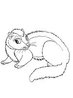 Ferret-coloring-pages-16