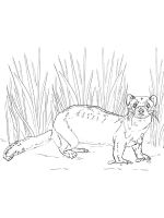 Ferret-coloring-pages-2