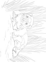 Ferret-coloring-pages-4