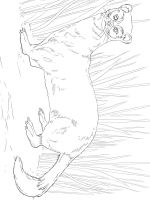 Ferret-coloring-pages-5