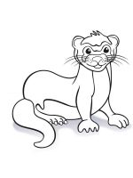 Ferret-coloring-pages-9