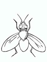 Fly-coloring-pages-11