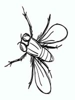 Fly-coloring-pages-13