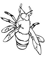 Fly-coloring-pages-16