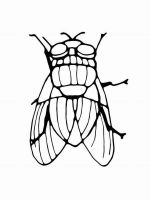 Fly-coloring-pages-2