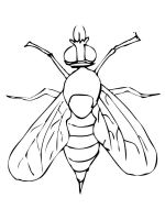 Fly-coloring-pages-3