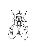 Fly-coloring-pages-6