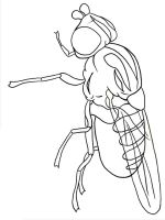 Fly-coloring-pages-7