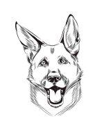 German-Shepherd-coloring-pages-11
