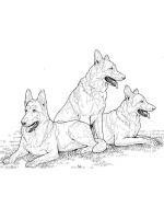 German-Shepherd-coloring-pages-12