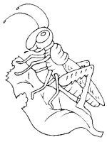 Grasshopper-coloring-pages-12