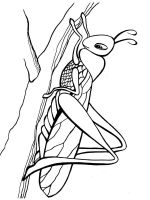 Grasshopper-coloring-pages-14