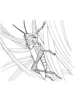 Grasshopper-coloring-pages-2