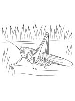 Grasshopper-coloring-pages-21
