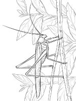 Grasshopper-coloring-pages-8
