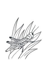 Grasshopper-coloring-pages-9