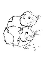 Guinea-Pig-coloring-pages-12