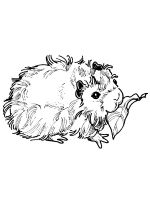 Guinea-Pig-coloring-pages-16