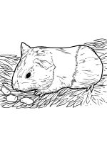 Guinea-Pig-coloring-pages-18