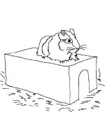 Guinea-Pig-coloring-pages-25