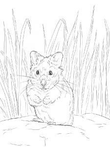 Hamster-animal-coloring-pages-338