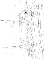 Hamster-animal-coloring-pages-341