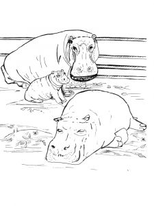 Hippopotamus-animal-coloring-pages-335