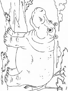 Hippopotamus-animal-coloring-pages-346