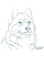 Husky-coloring-pages-1