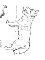 Husky-coloring-pages-10