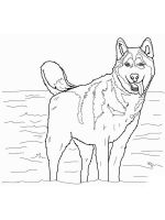 Husky-coloring-pages-3