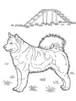 Husky-coloring-pages-4