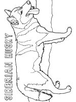 Husky-coloring-pages-5