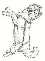Husky-coloring-pages-6