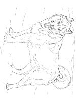 Husky-coloring-pages-7