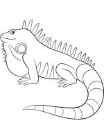 Iguana-coloring-pages-2