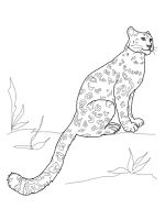 Irbis-coloring-pages-10